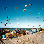 021 Morocco Essaouira by Tiberlo Frascarl via flickr